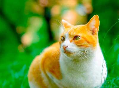 Корм для кошек БИСКО С ПЕЧЕНЬЮ
