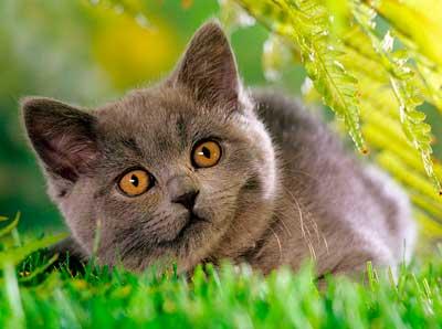 Корм для кошек БИСКО С ГОВЯДИНОЙ