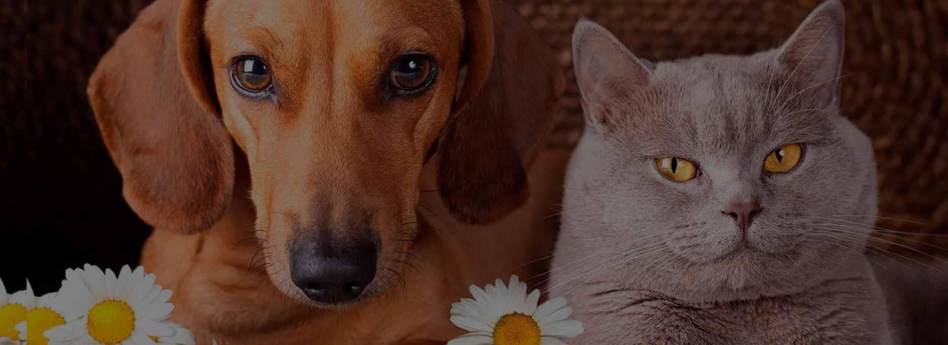 Сухие корма «Bisko» для собак и кошек