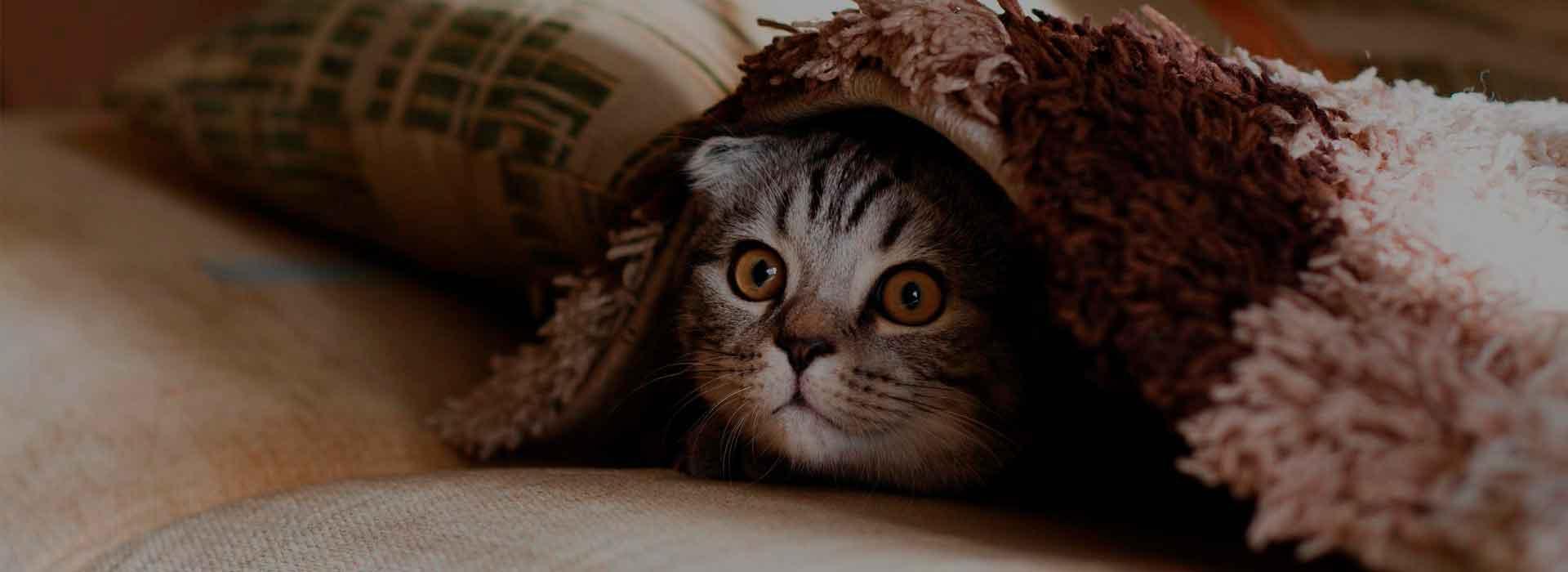 Сухие корма «Bisko» для кошек