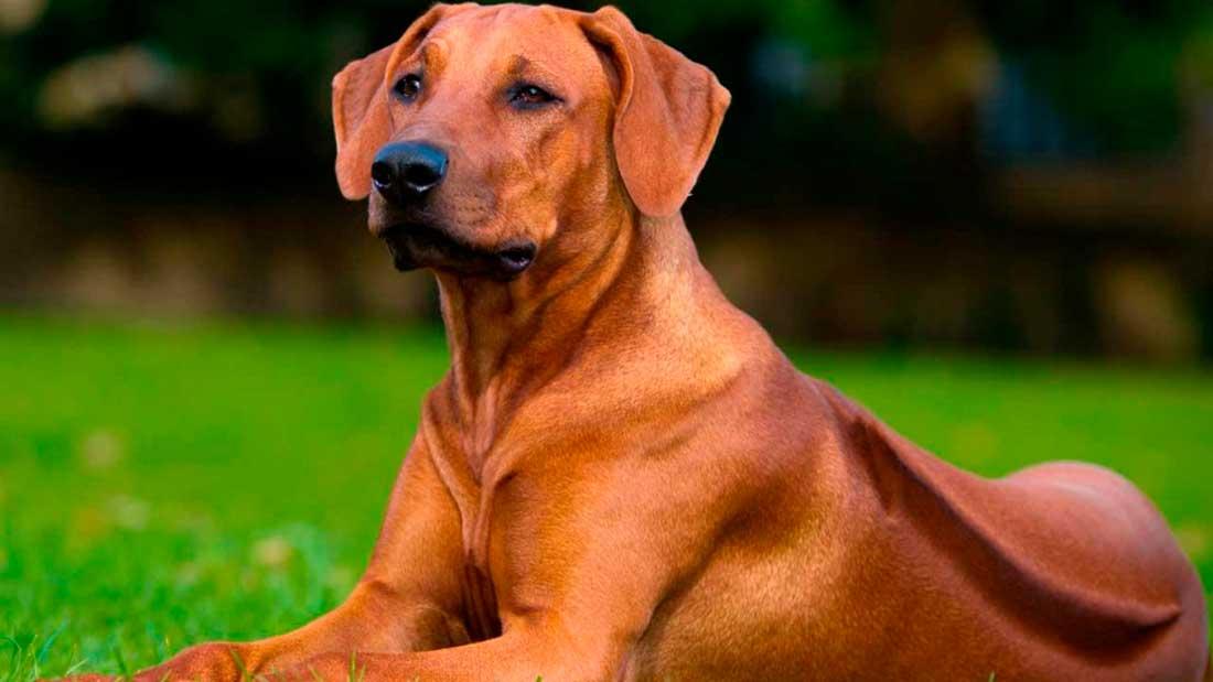 Корм для взрослых собак со средним уровнем активности