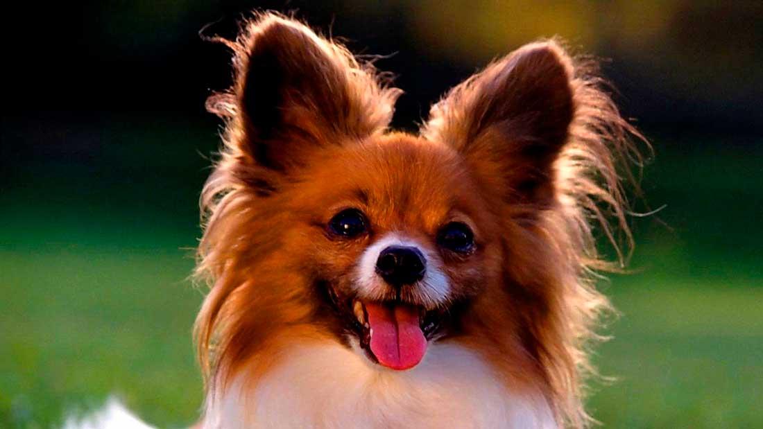 Корм для взрослых собак мелких пород