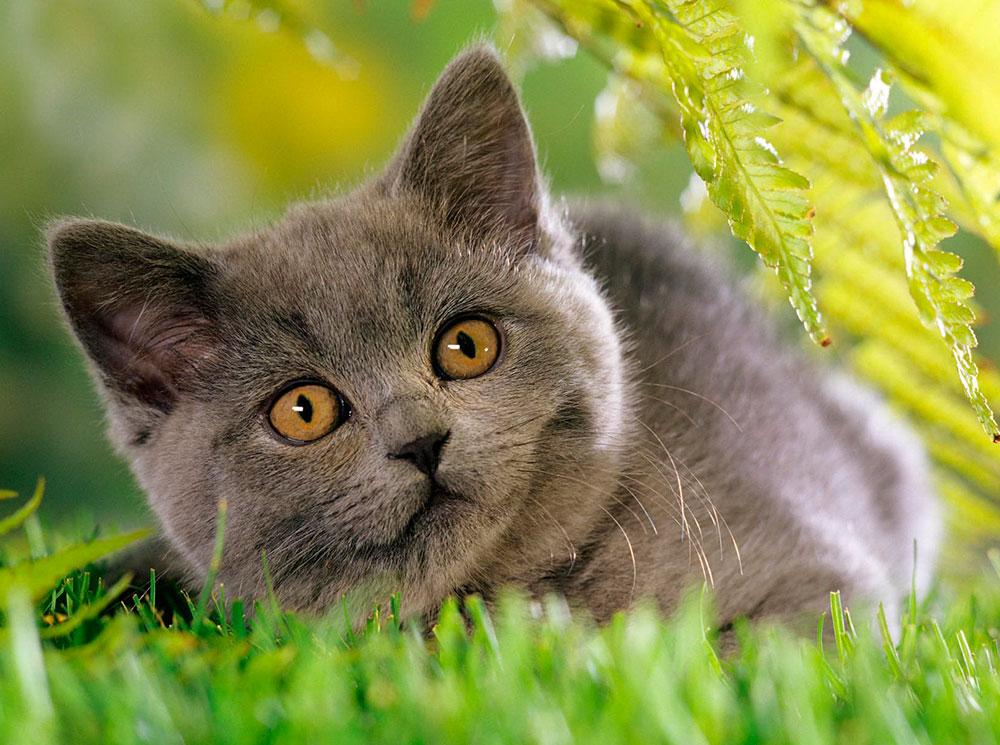 Корм БИСКО для кошек