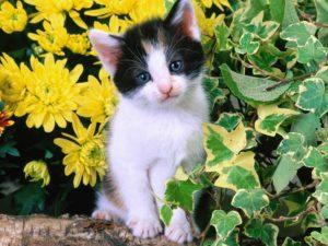 БИСКО для кошек с говядиной